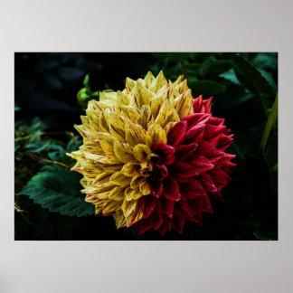 Dahlie-Blume Poster