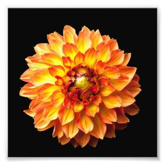 Dahlie-Blumendruck 6x6in Fotodruck