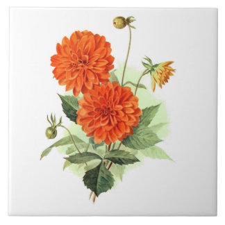 Dahlie-'orange Feuer King Fliese