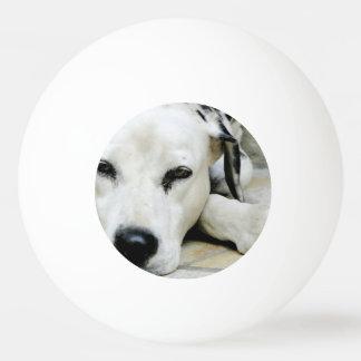 Dalmatinischer Hund Tischtennis Ball