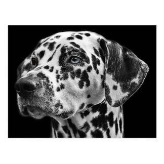 Dalmatinischer Schwarzweiss-Hund Postkarte