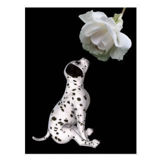 Dalmatinischer Welpe und weiße Rosen-Postkarte Postkarte