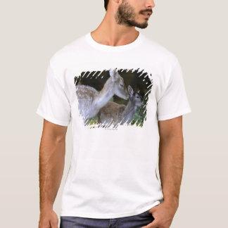 Damwild, Dama Dama, Bracherotwild, Hirschkalb T-Shirt