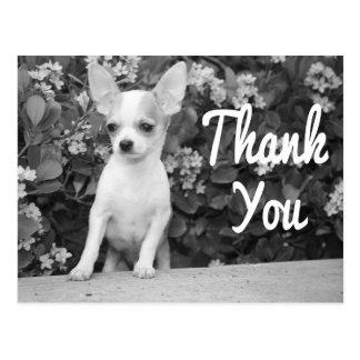 Danke Chihuahua-Hündchen-Postkarte Postkarten