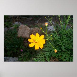Das Gelb der Naturen Poster