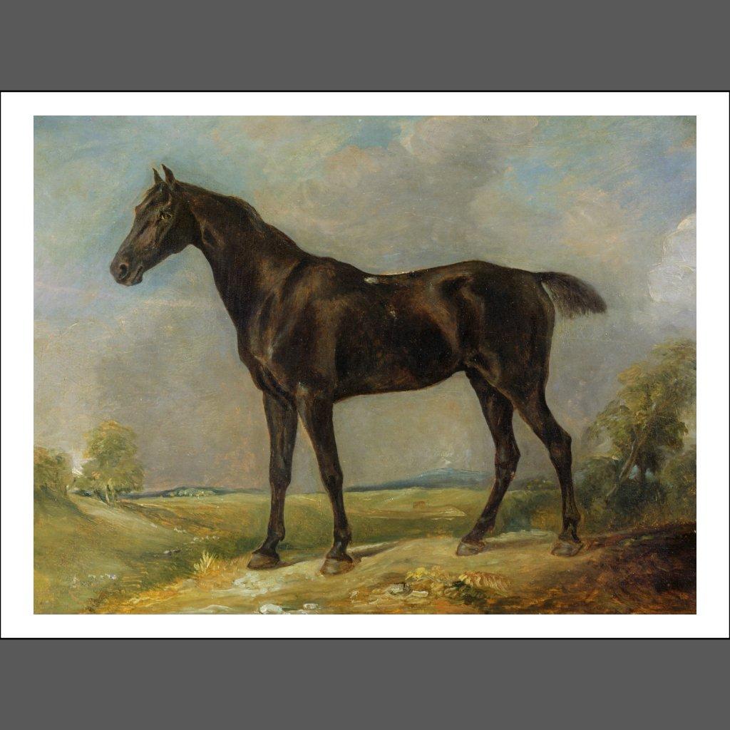 Schwarzes Pferd Reiten Das Schwarze Reiten-pferd
