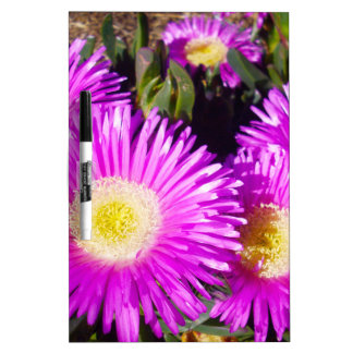 Dazzling_Purple_Daisies, _ Memoboard