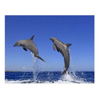 Delfin 2 postkarte