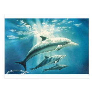Delphin-Trio Postkarte