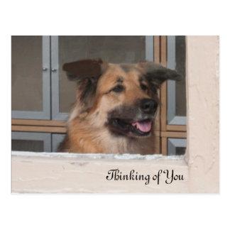 Denken an Sie Hundepostkarte Postkarte