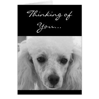 Denken an Sie Pudelhundegrußkarte Grußkarte