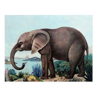 Der Afrikanische Elefant oder der afrikanische Postkarte
