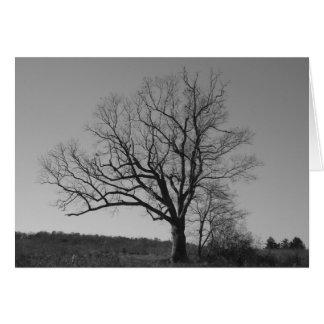 Der Baum New-Jersey Teufels Karte