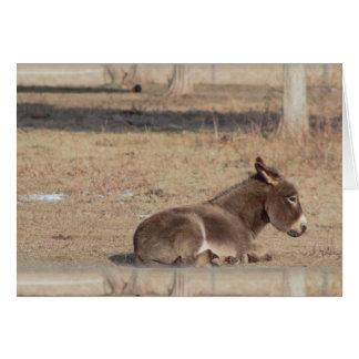 Der einsame Esel Grußkarte