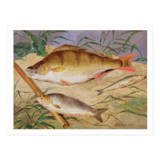 Der Fang eines Anglers der groben Fische (Öl auf P Postkarten