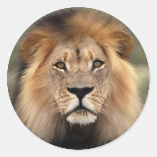 Der Löwe Runder Aufkleber