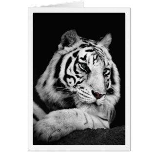 Der weiße bengalische Tiger Karte