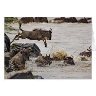 Der Wildebeest springend in Mara-Fluss während Karte