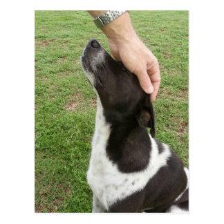 Des Hundes sind der beste Freund eines Mannes! Postkarte
