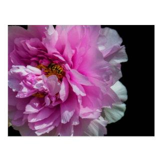 Die Blume und die Biene Postkarte