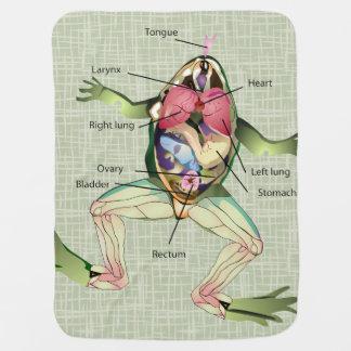 Die Die Anatomie-Illustration des Frosches Babydecke