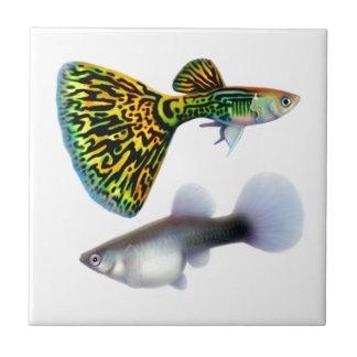 Die extravagante Fantailguppies-Fliese Kleine Quadratische Fliese