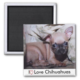 Die Freude des Chihuahua-Liebhabers Quadratischer Magnet