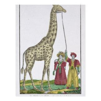 Die Giraffe dargestellt dem König Postkarte