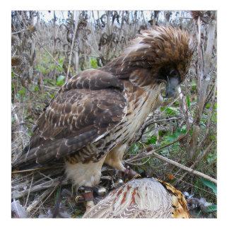 Die Kunst von Falknerei: Rot angebundener Falke