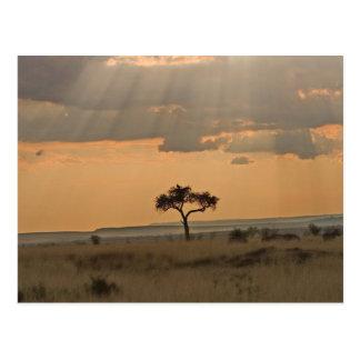 Die Sonnestrahlen, die durch den Nachmittag Postkarte