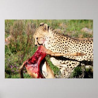 Die Tötung eines Gepards Poster