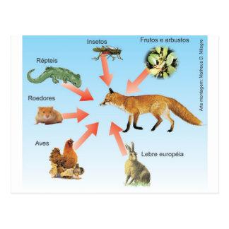 dietaraposa11 didaktisches Schema Diät des Fuchses Postkarte