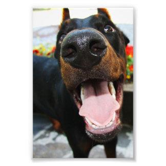 Dobermann-Foto Fotografie