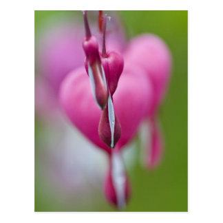 Drastische Farbe und Form des blutenden Herzens Postkarte