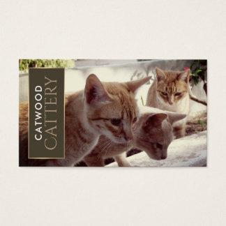 Drei Ingwer-Kätzchen, Cattery Visitenkarte