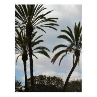 Drei Palmen Postkarte