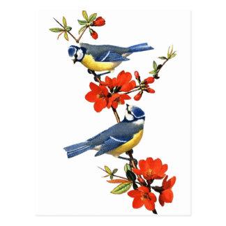 Drosseln mit Blüten-Postkarte Postkarte