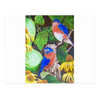 Drosseln Postkarte