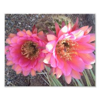 Druck-Kunst-Foto-Rosa-Kaktus-Blume