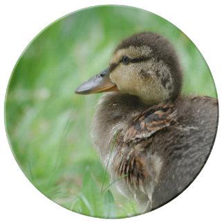 Duckling Entenküken ~ Foto Jean-Louis Glineur Teller Aus Porzellan