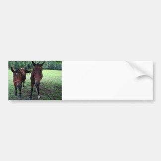 Dunkles Braun Pferde auf Weide Autoaufkleber