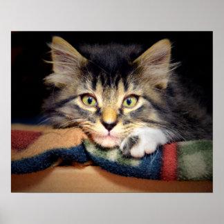 Durchdachtes Tabby-Kätzchen Poster