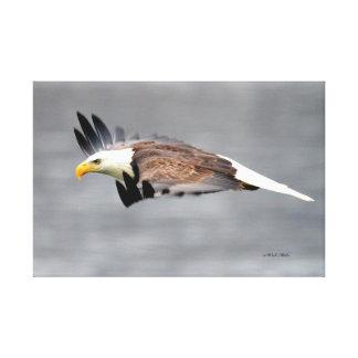 Eagle im Heimlichkeits-Modus Leinwanddruck