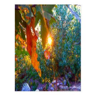 Eden-Sonnenuntergang Postkarte
