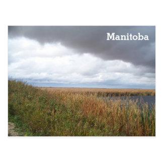 Eichen-Hängematten-Sumpf Postkarte
