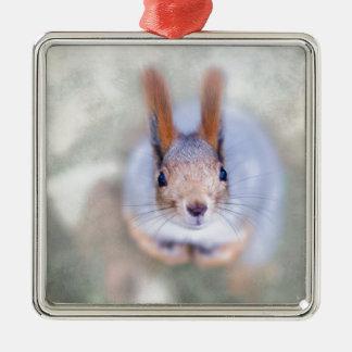 Eichhörnchen betrachtet Sie von unten nach oben Silbernes Ornament