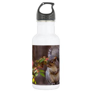 Eichhörnchen bittet geduldig trinkflasche
