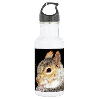 Eichhörnchen, das eine Nuss isst Edelstahlflasche