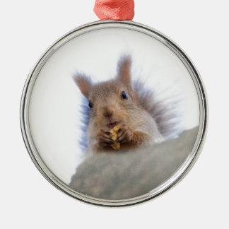 Eichhörnchen mit einer Walnuss Silbernes Ornament