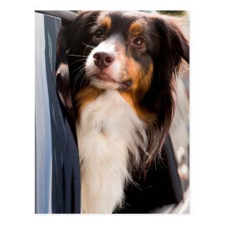 Ein Hund mit ihrem Kopf aus einem Auto-Fenster Postkarte